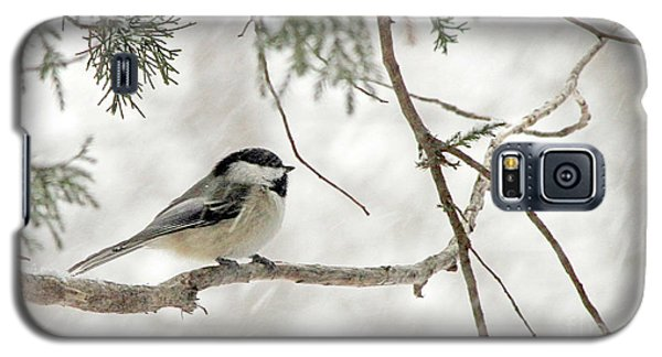 Chicadee In A Snow Storm  Galaxy S5 Case