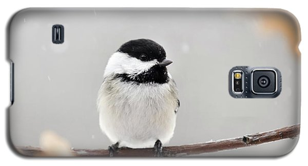 Galaxy S5 Case featuring the photograph Chickadee Bird In Snow by Christina Rollo