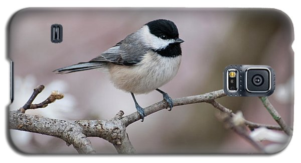 Galaxy S5 Case featuring the photograph Chickadee - D010026 by Daniel Dempster