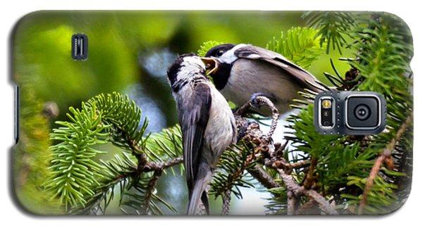 Chickadee Feeding Time Galaxy S5 Case