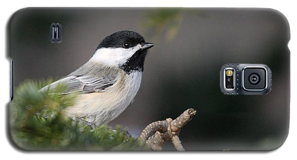 Galaxy S5 Case featuring the photograph Chickadee In Balsam Tree by Susan Capuano