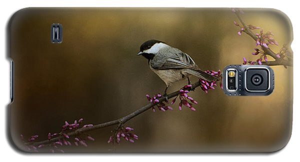 Chickadee In The Golden Light Galaxy S5 Case by Jai Johnson