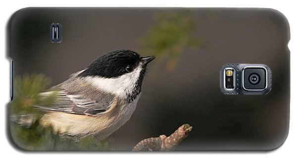Galaxy S5 Case featuring the photograph Chickadee In The Shadows by Susan Capuano
