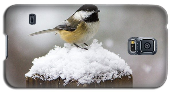 Chickadee In The Snow Galaxy S5 Case
