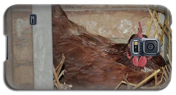 Chicken Box Galaxy S5 Case