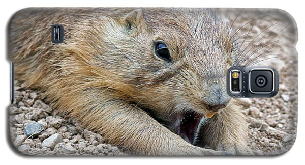 Chillin' Prairie Dog Galaxy S5 Case by Elaine Malott