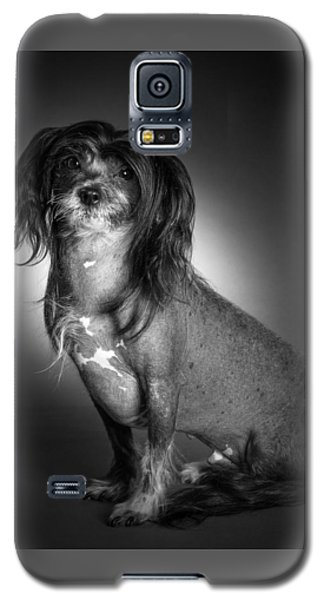 Chinese Crested - 01 Galaxy S5 Case by Larry Carr