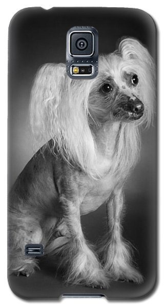Chinese Crested - 03 Galaxy S5 Case by Larry Carr
