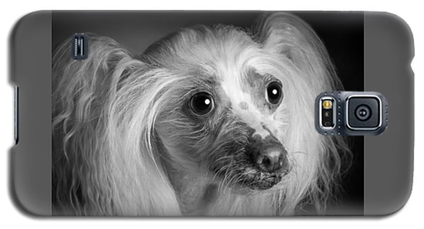 Chinese Crested - 04 Galaxy S5 Case