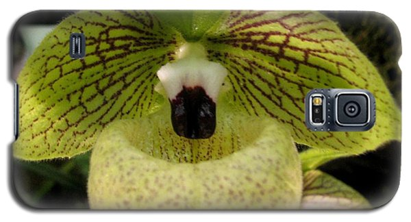 Galaxy S5 Case featuring the photograph Chinese Ladyslipper Orchid by Alfred Ng