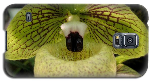 Chinese Ladyslipper Orchid Galaxy S5 Case