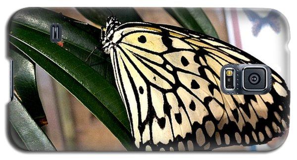 Chinese Yellow Swallowtail Galaxy S5 Case