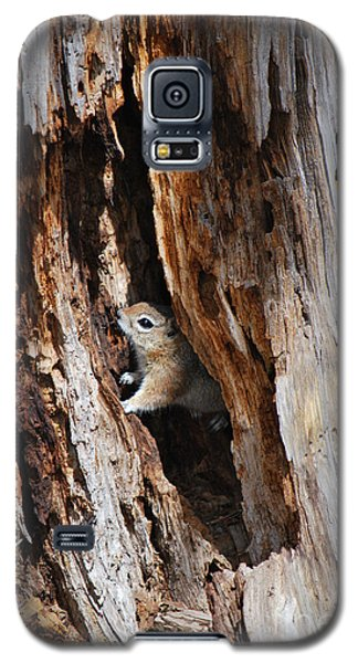 Galaxy S5 Case featuring the photograph Chipmunk - Eager Arizona by Donna Greene