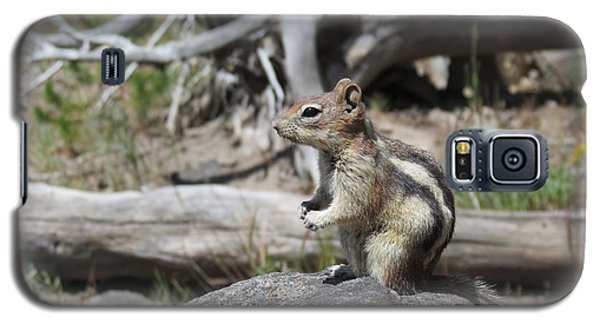 Chipmunk At Yellowstone Galaxy S5 Case by Ausra Huntington nee Paulauskaite