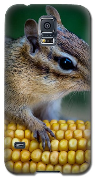 Chipmunk Goes Wild For Corn Galaxy S5 Case