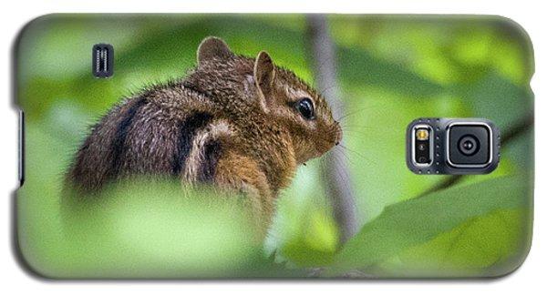 Chipmunk Galaxy S5 Case