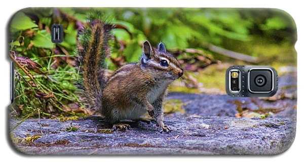 Galaxy S5 Case featuring the photograph Chipmunk by Jonny D