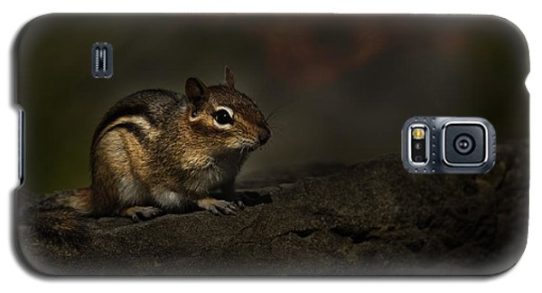 Galaxy S5 Case featuring the photograph Chipmunk On Rock by Michael Cummings
