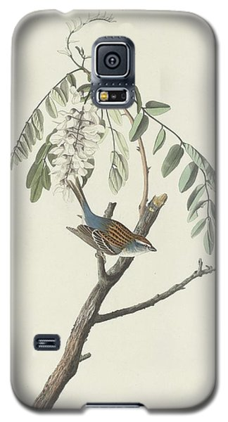 Chipping Sparrow Galaxy S5 Case by Dreyer Wildlife Print Collections