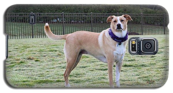 Chloe At The Dog Park Galaxy S5 Case