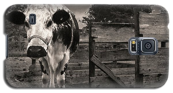 Chocolate Chip At The Stables Galaxy S5 Case