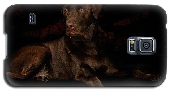 Chocolate Lab Dog Galaxy S5 Case