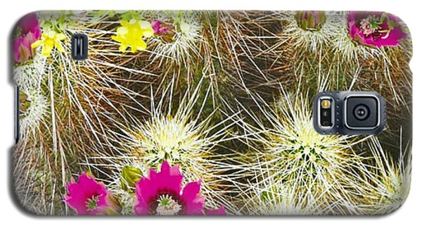Cholla Cactus Blooms Galaxy S5 Case