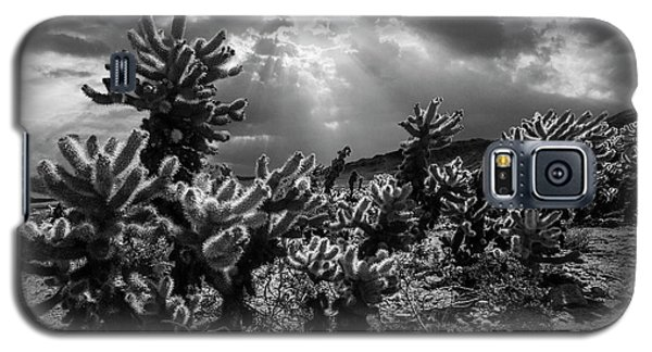 Galaxy S5 Case featuring the photograph Cholla Cactus Garden Bathed In Sunlight In Black And White by Randall Nyhof