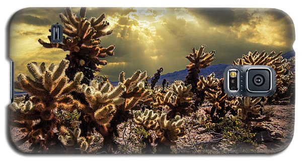 Galaxy S5 Case featuring the photograph Cholla Cactus Garden Bathed In Sunlight In Joshua Tree National Park by Randall Nyhof