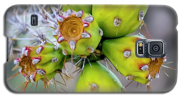 Galaxy S5 Case featuring the photograph Cholla Fruit S48 by Mark Myhaver