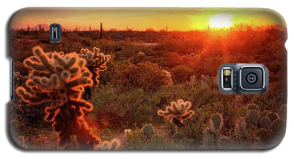 Galaxy S5 Case featuring the photograph Cholla Sunset In The Sonoran  by Saija Lehtonen