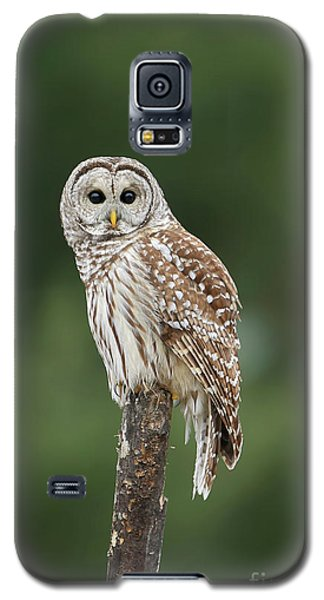 Chouette Perchee. Galaxy S5 Case