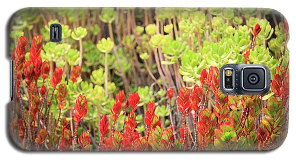 Christmas Cactii Galaxy S5 Case