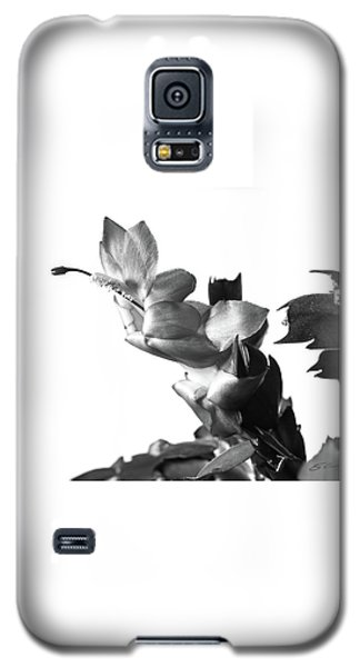 Galaxy S5 Case featuring the photograph Christmas Cactus by Ed Cilley
