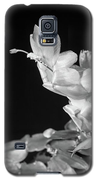 Christmas Cactus On Black Galaxy S5 Case