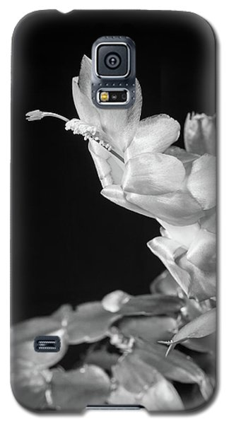 Galaxy S5 Case featuring the photograph Christmas Cactus On Black by Ed Cilley