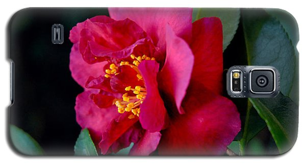 Galaxy S5 Case featuring the photograph Christmas Camellia by Marie Hicks