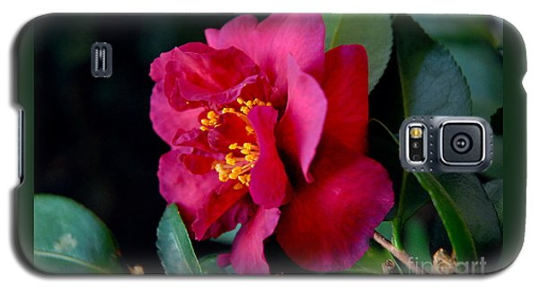 Christmas Camellia Galaxy S5 Case by Marie Hicks