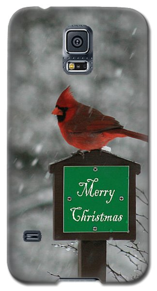 Christmas Cardinal Male Galaxy S5 Case by George Jones