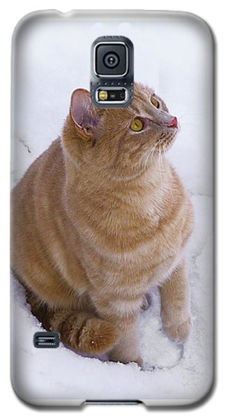 Christmas Cat Galaxy S5 Case