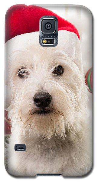 Elf Galaxy S5 Case - Christmas Elf Dog by Edward Fielding