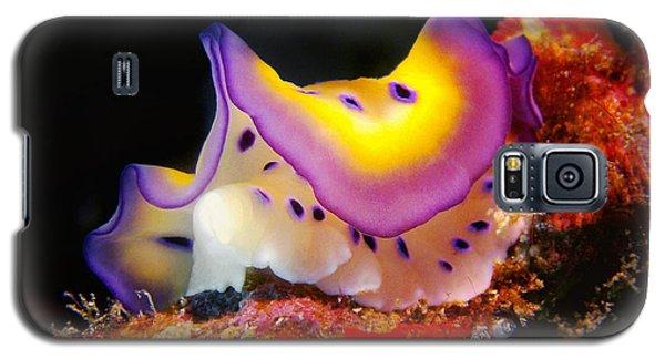 Chromodoris Kunei Nudibranch  Galaxy S5 Case