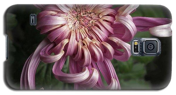 Chrysanthemum 'jefferson Park' Galaxy S5 Case