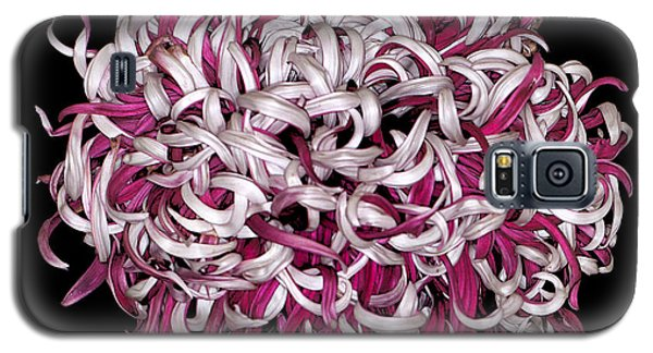 Chrysanthemum 'lili Gallon' Galaxy S5 Case