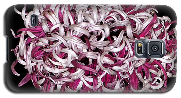 Chrysanthemum 'lili Gallon' Galaxy S5 Case