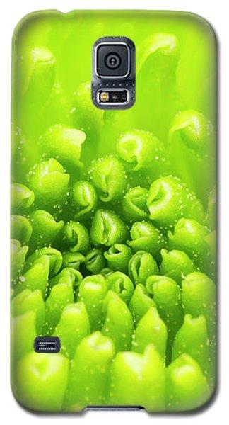 Chrysanthemum Macro Galaxy S5 Case