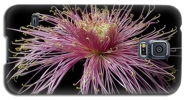 Chrysanthemum 'mystic' Galaxy S5 Case