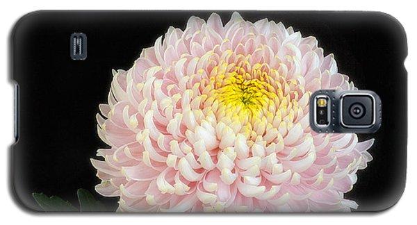 Chrysanthemum 'otome Pink' Galaxy S5 Case