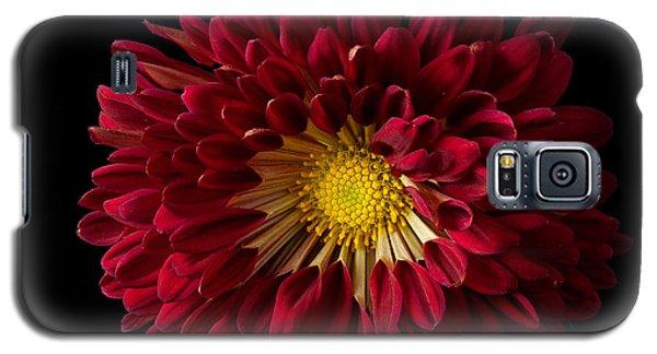 Chrysanthemum 'red Wing' Galaxy S5 Case