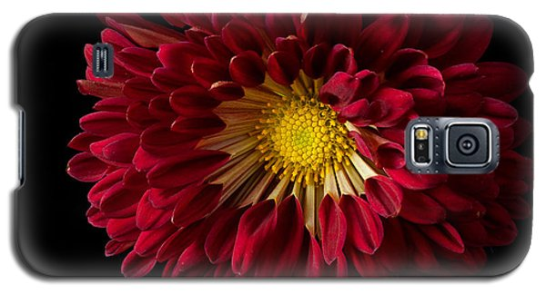 Chrysanthemum 'red Wing' Galaxy S5 Case